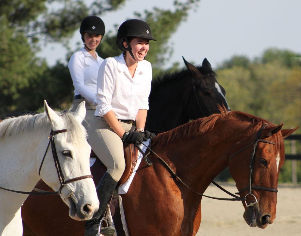 программа язык плюс конный спорт за рубежом