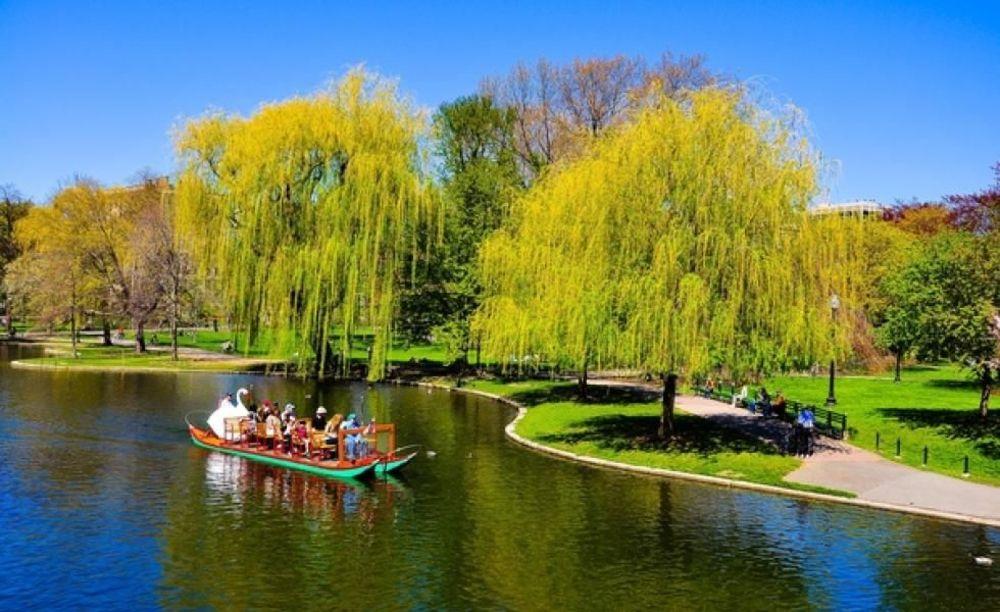 LAL Boston дети на прогулке в парке