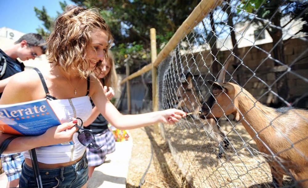 дети в зоопарке в лагере LAL на Мальте