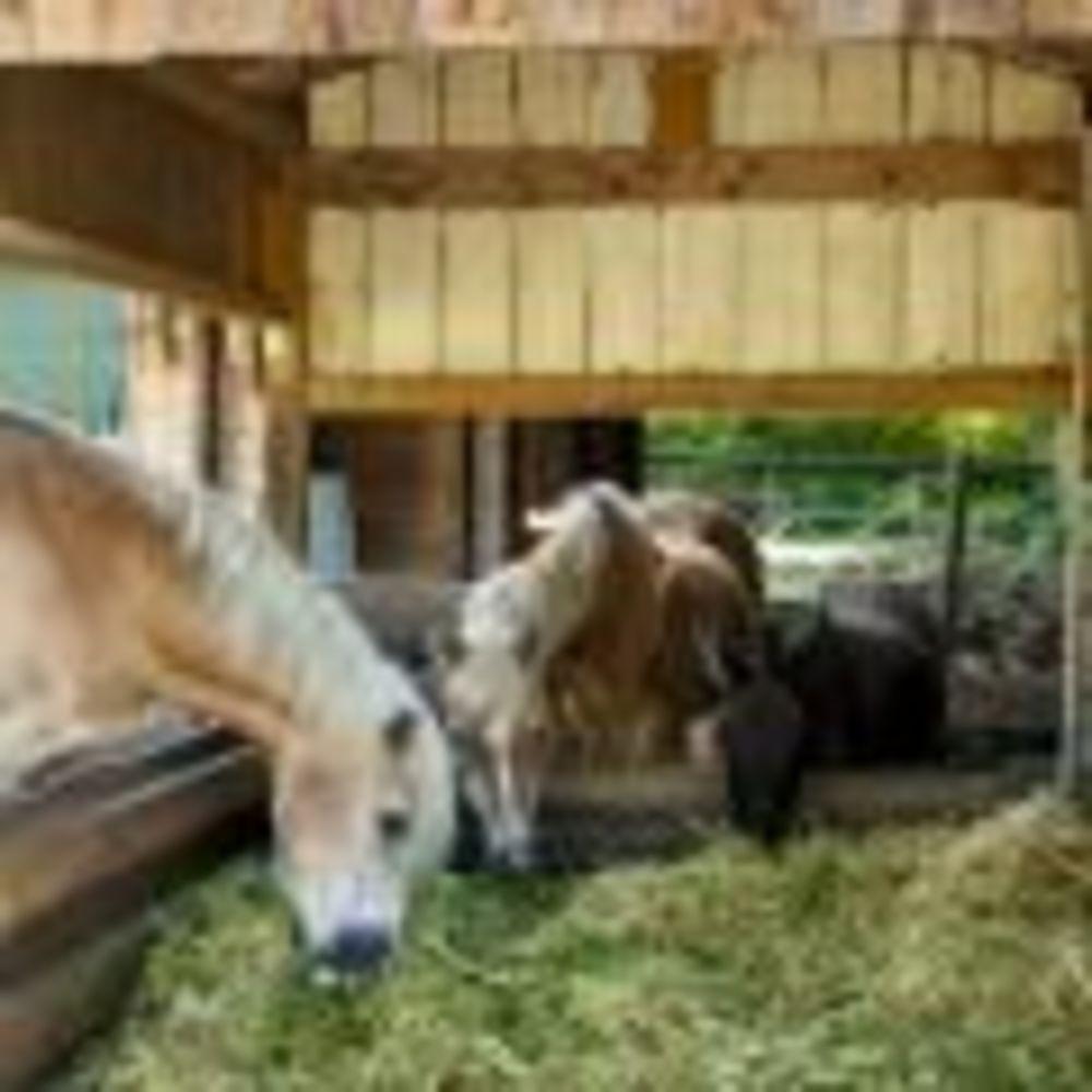 German Language School, лошадки