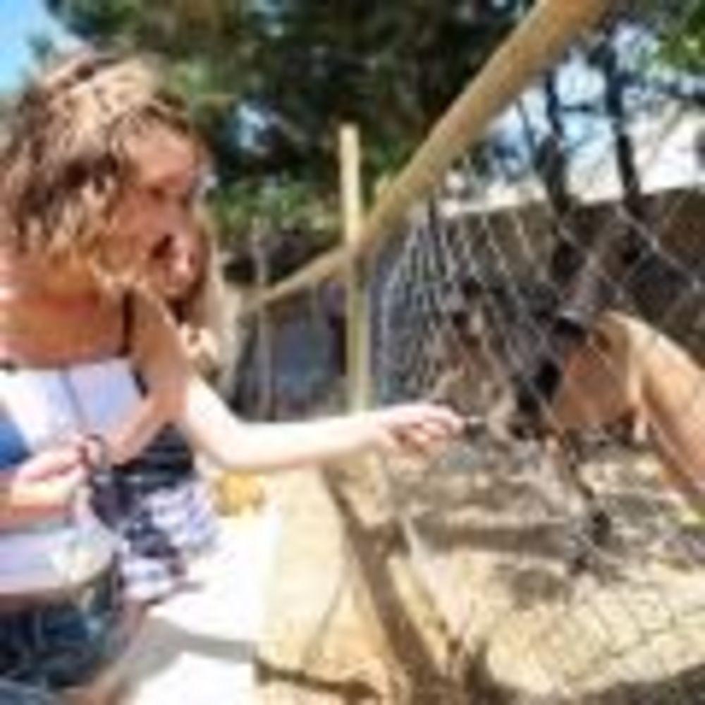 діти в зоопарку в таборі LAL на Мальті