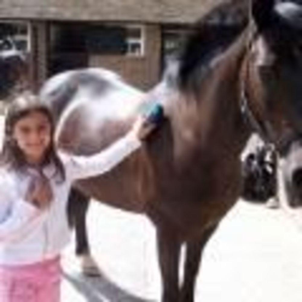 Лошадь Plumpton College