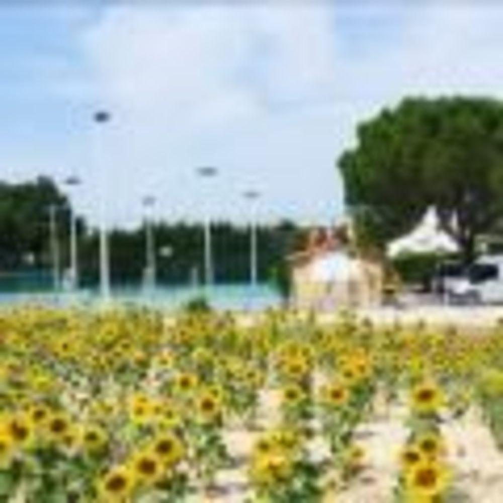 цветы на территории школы International Bilingual School of Provence